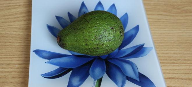 Важное об авокадо: как выбрать, как хранить